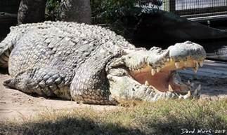 World Record Biggest Alligator