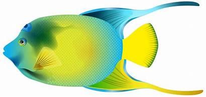Fish Clipart Angel Transparent Angelfish Clip Queen