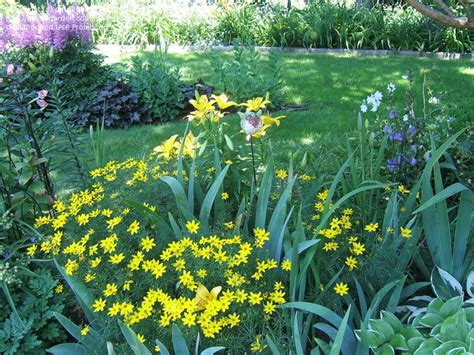 yellow perennial flowers for sun perennials shorter yellow perennial for part sun part shade garden 1 by pirl