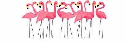 Flamingo Clipart Pink Clip Flamingos Transparent Tropical