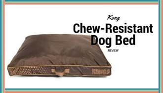kong chew resistant bed kong chew resistant heavy duty pillow bed review mini