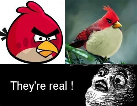 Angry Bird Meme - angry birds funny quotes quotesgram