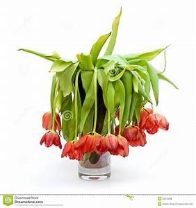 Tulpen In Vase : vaas van dode tulpen stock foto afbeelding bestaande uit bloem 30275268 ~ Orissabook.com Haus und Dekorationen