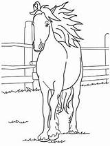 Horse Coloring Pages Printable Cute Forget Supplies Don sketch template