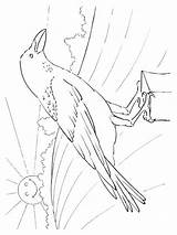 Coloring Pages Crows Crow Printable Birds Print sketch template