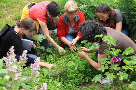 cuisiner les herbes sauvages reconna 238 tre et cuisiner les plantes sauvages comestibles avec ren 233 e rupin