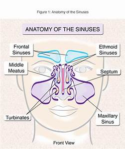 Sinusitis Treatment And Surgery Nyc