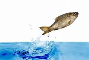 Quotes about Fish out of water (58 quotes)