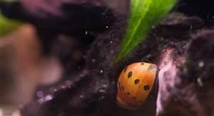 Aquarium Pflanzen Schnellwachsend : aquarium beleuchtung gegen algen 70 schnellwachsende aquariumpflanzen gegen algen im aquarium ~ Frokenaadalensverden.com Haus und Dekorationen