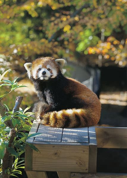 zoo animals   discontents   york times