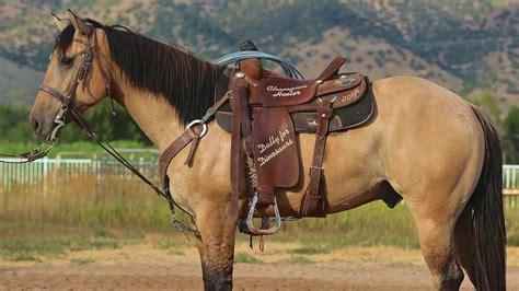 buckskin horse gelding hands tall facts aqha years heel average