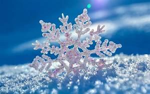 Beautiful Snowflake in Winter Season HD Photos