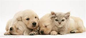 Pictures Of Cute Baby Kittens And Puppies Together - 4k ...