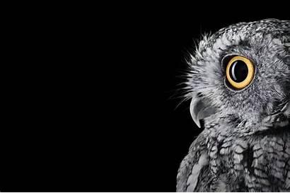 Surface Owl Studio Res Ms Mehedi Oct