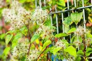 Schmucklilie überwintern Gelbe Blätter : tomaten haben gelbe bl tter woran liegt 39 s ~ Eleganceandgraceweddings.com Haus und Dekorationen