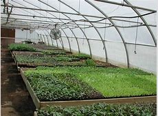 Greenhouse Construction Choose the Best Greenhouse Site