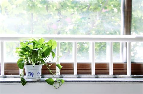 Indoor Window Sill Plants by How Much Light Do My Indoor Plants Needs Plantmaid