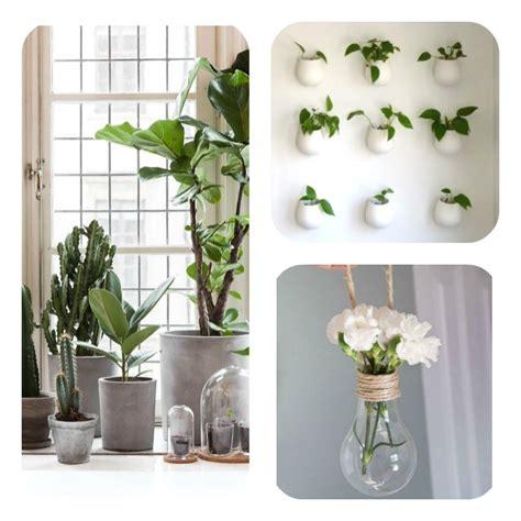 plante cuisine decoration comment décorer intérieur avec des plantes article