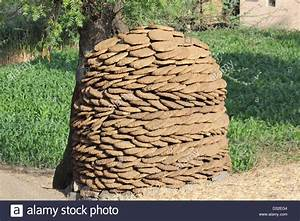 Dry cow dung cakes heaped to use as cooking fuel Stock ...