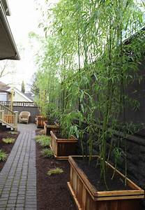 Bambou A Planter : bamboo planters ~ Premium-room.com Idées de Décoration