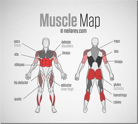 The muscular system is responsible for the movement of the human body. SUP Workout Routine