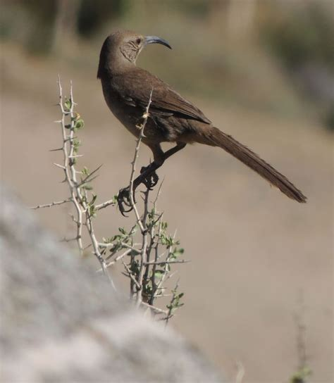 bird identification closed southern california bird with