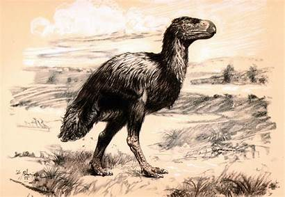 Prehistoric Burian Zdenek Animals Wallpapers Diatryma Definition