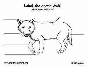 Wolf  Arctic  Labeling Page