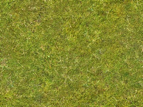 moss  background texture ground moss green