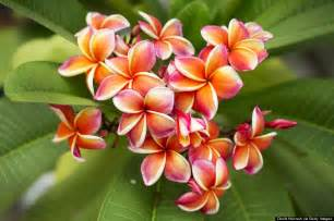 Hawaiian Tropical Flowers Names