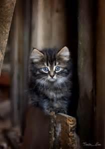 Fluffy Kitten Baby Cat