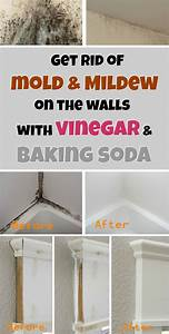 get rid of mold mildew on the walls with vinegar and With how to get rid of mold on walls in bathroom