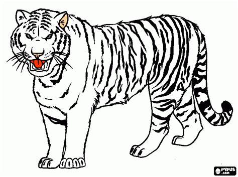 coloriage de tigre blanc  imprimer