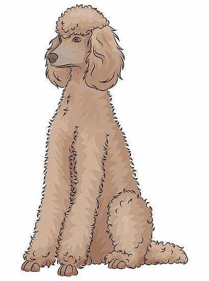 Poodle Clipart Dog Clip Cliparts Clipground Transparent