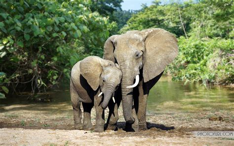 African Elephant Wallpaper 68 Images