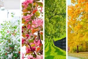 Welches Gemüse Zu Welcher Jahreszeit : welche blumen wachsen in welcher jahreszeit my blumenversand ~ Whattoseeinmadrid.com Haus und Dekorationen