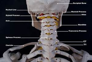 Upper Cervical Spine Disorders  Anatomy Of The Head And