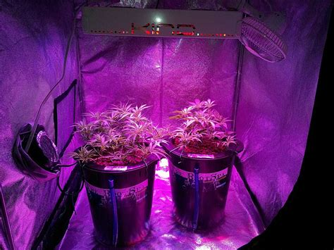 led plant grow lights k5 xl1000 led grow journal 1 3 lb harvest grow