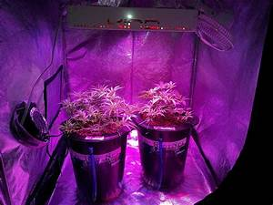 Led Grow Set : kind k5 xl1000 led grow journal 1 3 lb harvest grow weed easy ~ Buech-reservation.com Haus und Dekorationen
