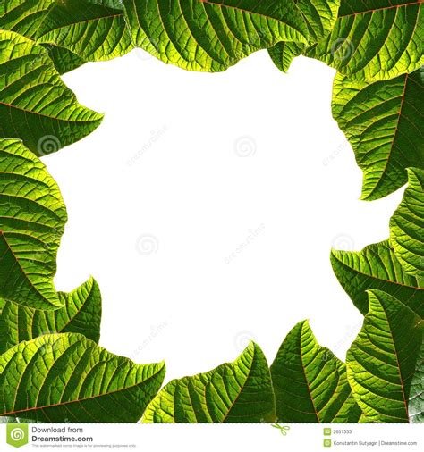 framing leaves leaf frame stock image image of beautiful colorful many 2651333