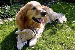 Hund Im Garten Vergraben : ferienh user mit hund urlaub mit hund ~ Lizthompson.info Haus und Dekorationen