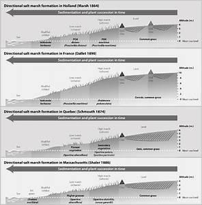 Chronosequences Of Salt Marsh Sedimentation And Plant
