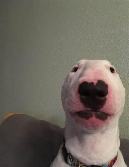 Dog Face Okbuddyretard Origin