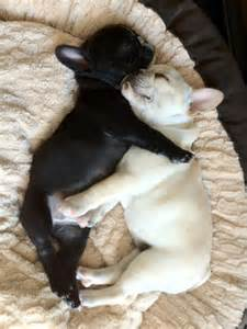 Doggies hugging - Dogs Picture