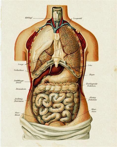 Body scientific international post it anatomy of human skeleton chart teaching supplies classroom safety. Vintage Medical Anatomy Human Organ Illustration Chart Real Canvas Art Print   eBay