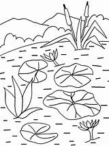 Coloring Lily Water Pages Pad Flower Printable Lilies Sheets Cool2bkids Drawing Painting Flowers Plants Pads Patterns Plant Getcolorings Floating Recommended sketch template