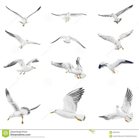 Flying Seagull Stock Illustration Image Of Fishing