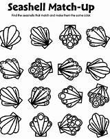 Seashell Coloring Crayola Match Shell Sea Shells Printable Preschool Seashells Spring Matching Sheets Adults Gemerkt Von sketch template
