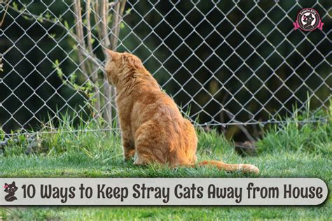 10 ways to keep stray cats away from house sweetie kitty