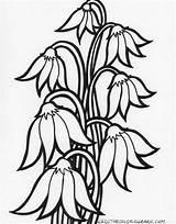 Flores Cu Colorear Pintar Dibujo Cai Dibujos Desene Imprimir Coloring Lacramioare Flori Imagini Pentru Plansa Patterns Clopotel Flowers Modele Decenas sketch template